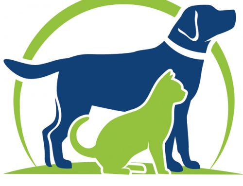 Important Information about Canine Influenza or Dog Flu