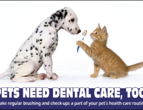 Low Cost Pet Dental Cleaning!