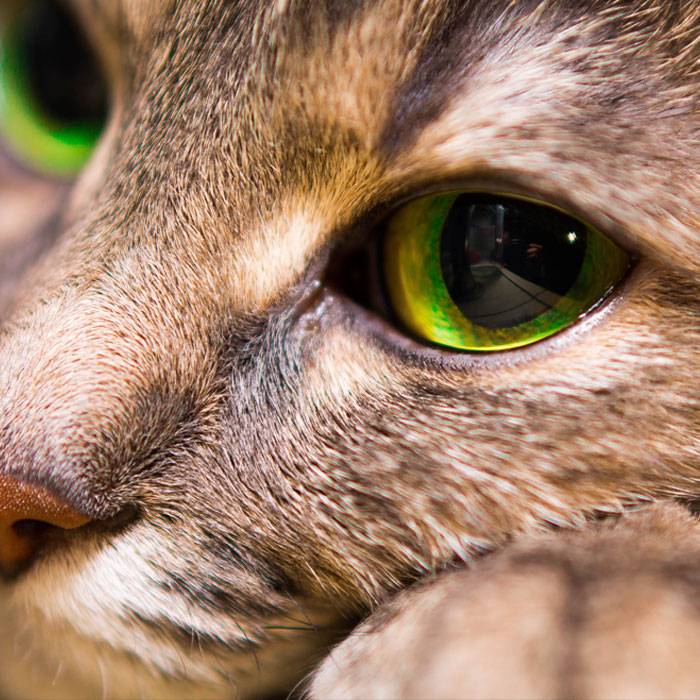 Portrait of a kind cat with big eyes close up.