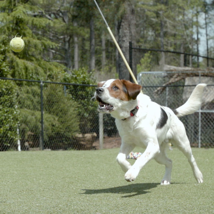a dog playing with a ball in a park